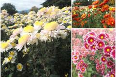 Цветы блок 1