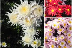Цветы блок 10
