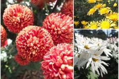 Цветы блок 11
