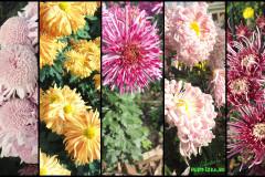 Цветы блок 12