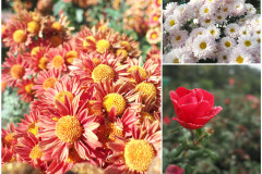 Цветы блок 13
