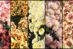 Цветы блок 2