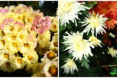 Цветы блок 3