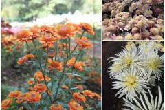 Цветы блок 4