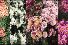 Цветы блок 5