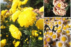 Цветы блок 6