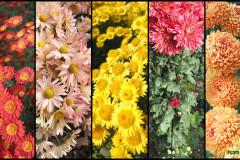 Цветы блок 7