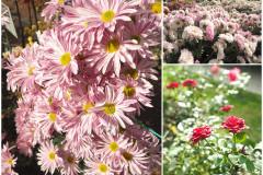 Цветы блок 8