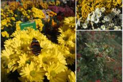 Цветы блок 9