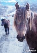 Horse_Post